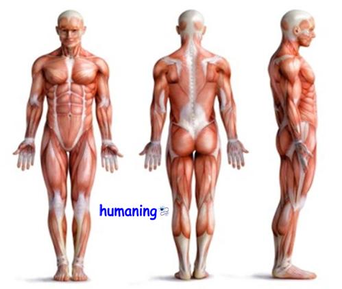 Significado Emocional Del Dolor Osteoarticular Y Muscular Tomas Elorriaga