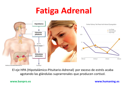 fatiga adrenal