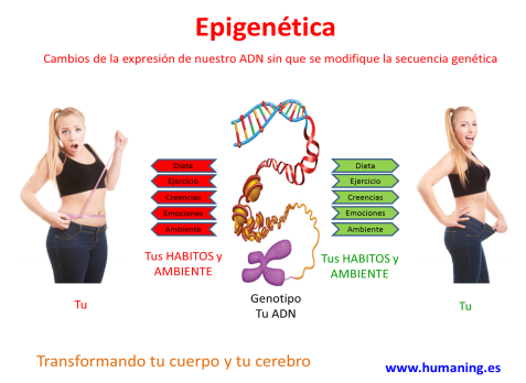 epigenetica 2